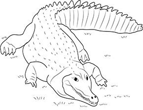 ausmalbild aligator im zoo zum ausdrucken