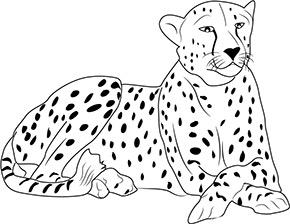 ausmalbild gepard im zoo zum ausdrucken