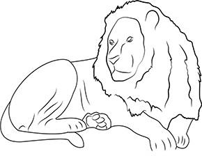 ausmalbild löwe im zoo zum ausdrucken